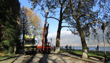 Ιωάννινα: Κόβονται σήμερα τα πλατάνια στον παραλίμνιο