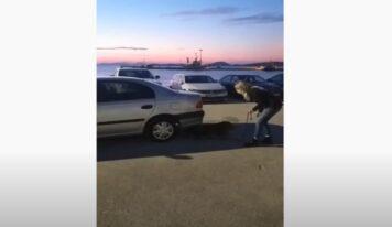 Η «Lussy» μυρίστηκε 17 κιλά κάνναβη σε αυτοκίνητο στη Θεσπρωτία (Βίντεο)