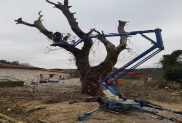 Ιωάννινα: Ξεκίνησε η κοπή και η απομάκρυνση πλατάνων (φωτογραφίες)