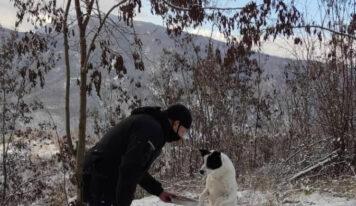 Δελβινάκι Ιωαννίνων: Η κίνηση αγάπης του αστυνομικού στον αδέσποτο σκύλο που έγινε viral