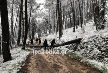 Γιάννενα: Δέντρο έπεσε δίπλα σε περαστικούς (φωτογραφίες)