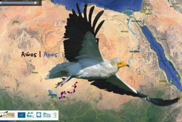 «Αώος»: Το πουλί που ταξιδεύει κάθε χρόνο 6.000 χλμ από την Αφρική… στην Κόνιτσα!