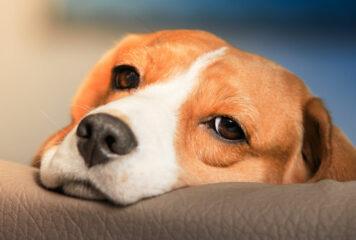 Γιάννενα: Ανήλικος πέταξε δυναμιτάκι σε σκύλο που βρισκόταν σε μπαλκόνι και τον τραυμάτισε
