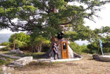 Κόνιτσα: Το δέντρο-εκκλησάκι του Αγίου Παϊσίου που δέχεται επισκέπτες απ' όλο τον κόσμο