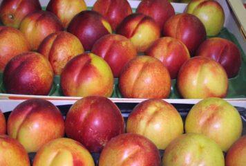 Γιάννενα: Τα σημεία που θα γίνει δωρεάν διανομή φρούτων στους ωφελούμενους