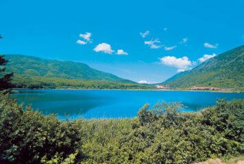 Γιάννενα: Μέδουσα που απαντάται στην Κίνα στη Λίμνη Ζαραβίνα – Γιατί χρειάζεται προσοχή